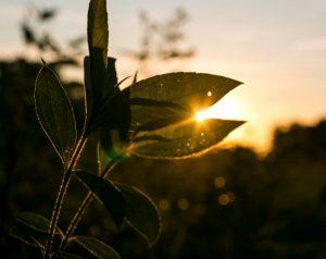 sunlight on the plants