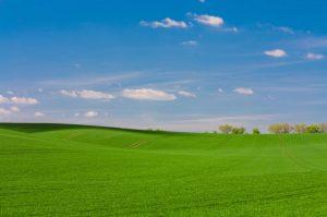 Zorro zoysia grass field