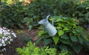 Ģray watering can