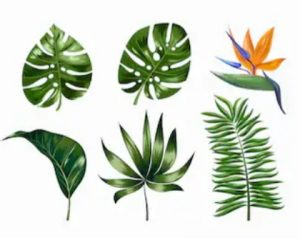 Types of Philodendron Serpens